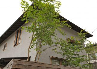 蟻ヶ崎台の家