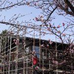 「桜並木の家」見学会を行います