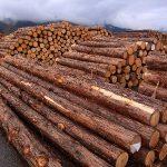 間伐材から丸太を探します
